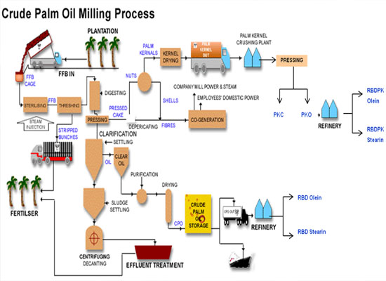 palm oil processing process