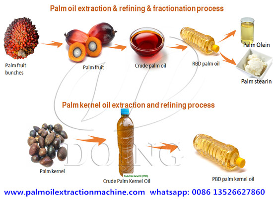 An overview of palm oil and palm kernel oil production process