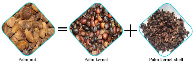 palm kernel cracker and shell separator
