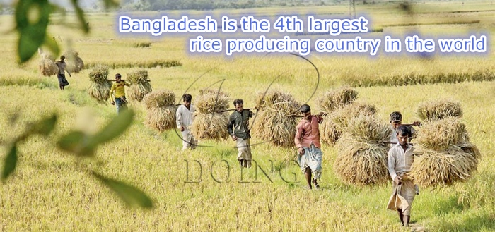 rice production in Bangladesh