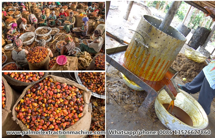 oil palm processing technology in africa