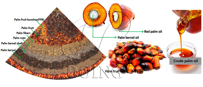 Palm and palm kernel